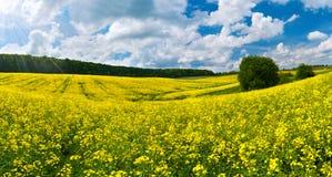 Campo colorido da flor Foto de Stock