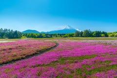 Campo colorido da flor de cerejeira no festival de Japão Shibazakura imagem de stock