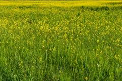 Campo colorido de batidas de florescência na mola imagem de stock royalty free