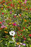 Campo Colourful dei fiori selvaggi di estate immagine stock