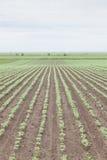 Campo coltivare Fotografia Stock Libera da Diritti
