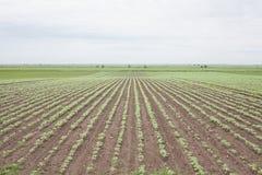 Campo coltivare Fotografie Stock Libere da Diritti