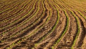 Campo coltivare fresco Fotografia Stock