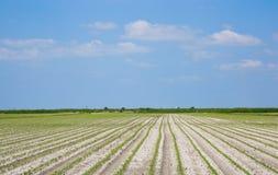 Campo coltivato Fotografie Stock