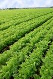 Campo coltivato Immagini Stock