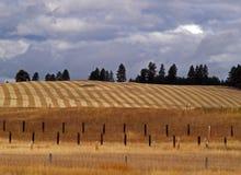 Campo coltivato - alberini della rete fissa Fotografie Stock Libere da Diritti