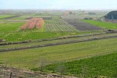 Campo coltivato alla molla Fotografie Stock