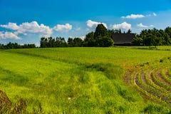 Campo coltivato con i fabbricati agricoli Immagine Stock