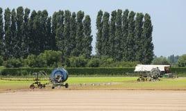Campo coltivato con lattuga verde ed il tubo di irrigazione s Fotografia Stock Libera da Diritti