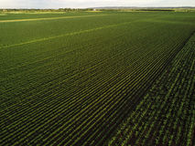 Campo coltivato dal punto di vista del fuco Immagini Stock Libere da Diritti