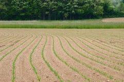 Campo coltivato fertile Fotografia Stock Libera da Diritti