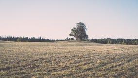 campo coltivato fresco in autunno - effetto d'annata Fotografia Stock Libera da Diritti