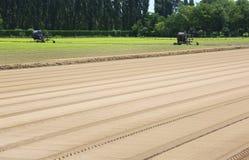 Campo coltivato gigantesco con lattuga Immagine Stock Libera da Diritti