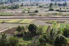Campo coltivato nel Vietnam Immagini Stock