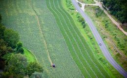 Campo coltivato verde, vista superiore Fotografia Stock Libera da Diritti