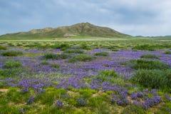 Campo com as flores no verão fotografia de stock