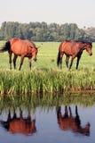 Campo com dois cavalos imagem de stock