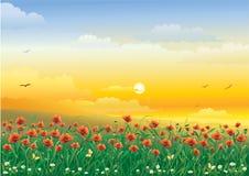Campo com flores Fotografia de Stock Royalty Free