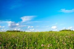 Campo com flores do prado Fotografia de Stock Royalty Free