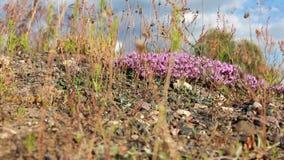Campo com grama e as flores selvagens na luz do sol video estoque