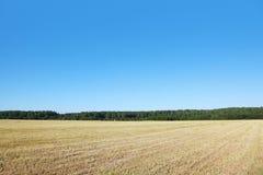 Campo com grama seca fotos de stock