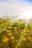 Campo com luz do sol Imagens de Stock