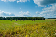 Campo com monte de feno verão Fotos de Stock