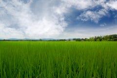 Campo com nuvens Fotografia de Stock Royalty Free