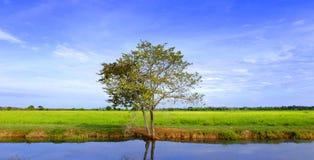 Campo com o céu azul Fotografia de Stock Royalty Free