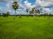 Campo com o céu azul em Ásia Foto de Stock