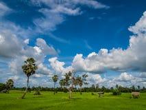 Campo com o céu azul em Ásia Imagens de Stock Royalty Free