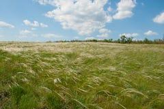 Campo com o céu e as nuvens da grama da pena Fotos de Stock