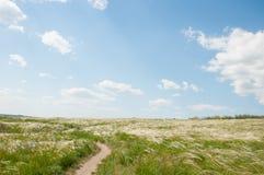 Campo com o céu e as nuvens da grama da pena Foto de Stock Royalty Free
