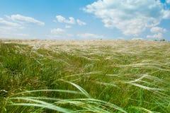 Campo com o céu e as nuvens da grama da pena Imagens de Stock