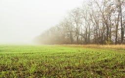 Campo com os brotos do trigo de inverno fotografia de stock royalty free