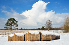 Campo com os pacotes da palha no inverno Alemanha Fotografia de Stock