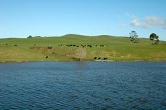 Campo com prados, lagos, árvores Imagem de Stock Royalty Free