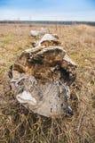 Campo com uma grama seca fotografia de stock