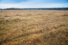 Campo com uma grama seca imagens de stock royalty free
