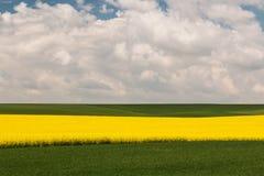 Campo com violação de semente oleaginosa Fotografia de Stock