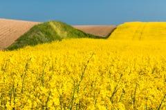 Campo com violação de semente oleaginosa Fotografia de Stock Royalty Free