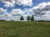 Campo con 3 alberi Fotografia Stock