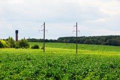 Campo con cereale crescente su  Immagine Stock