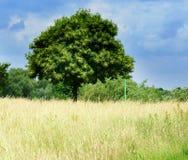 Campo con el árbol fotografía de archivo libre de regalías