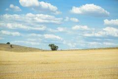Campo con el árbol y el cielo azul Imagen de archivo