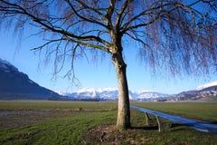 Campo con el árbol y montañas con nieve imagenes de archivo