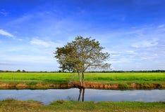 Campo con el cielo azul fotografía de archivo libre de regalías