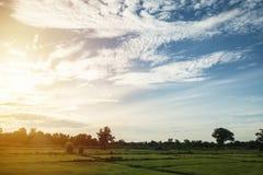 Campo con el cielo en sol de la mañana Imagen de archivo libre de regalías