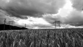 Campo con el grano Fotografía de archivo