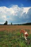 Campo con el perro encantador Foto de archivo